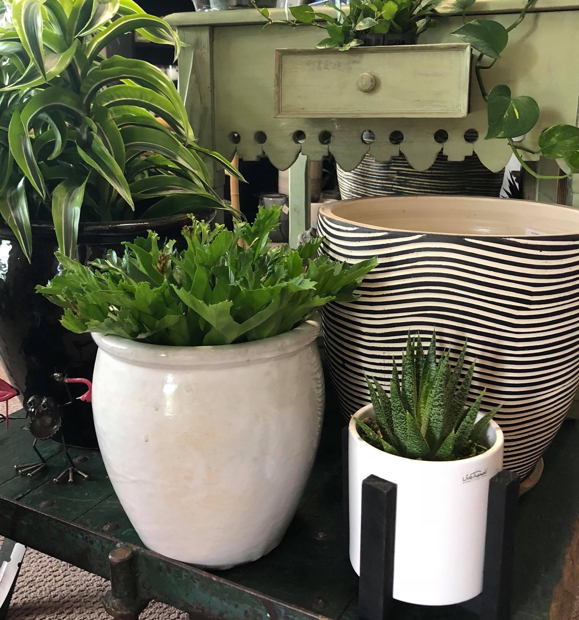 Indoor Plants Earthscapes Garden Room